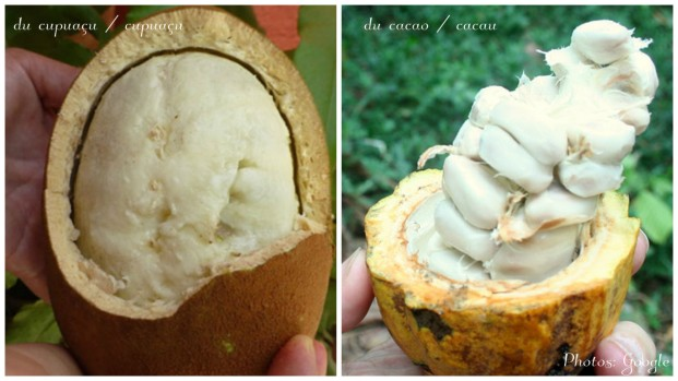 cupuaçu-cacao.jpg